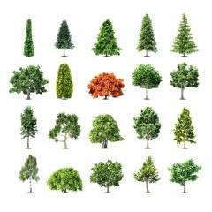 美しくリアルな木のベクター素材