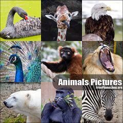 動物だらけの写真素材 animal pictures