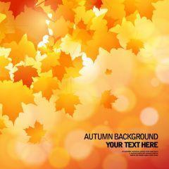 秋ならではの切ない光と紅葉の背景 ベクター素材