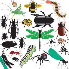 可愛い!虫さんたちのアイコン ベクター素材