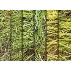 高画質で鮮やか!!草、芝生のテクスチャ素材