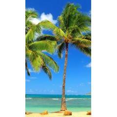 夏がさらに身近に!i Phone5用の夏画像40種類