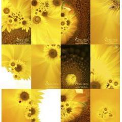 ポストカードにバッチリ合うひまわりのデザイン photoshop PSD素材