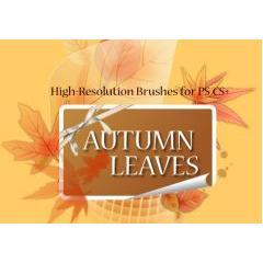 高性能!15種類の秋の枯れ葉のフォトショップブラシ素材!