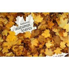 150種類の秋を感じる背景、テクスチャ素材