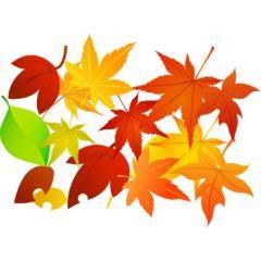 秋の葉の色々なデザイン! ベクター素材
