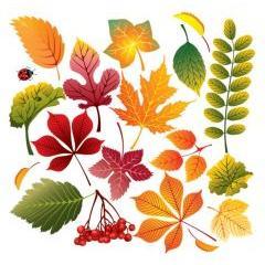 秋を彩る色んな葉っぱコレクション! ベクター素材