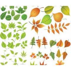 様々な秋を彩る葉っぱ ベクター素材