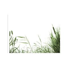 リアルな草のブラシ素材36種類セット