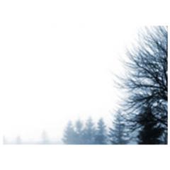 霧がかった幻想的な森を描けるブラシ素材
