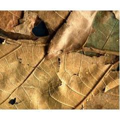 落ち葉や枯れ葉のテクスチャ素材