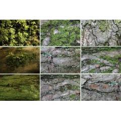 自然の雰囲気をそのまま伝える事が出来るテクスチャ素材